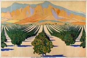 South African Orange Orchards, from the Series 'Summer's Oranges from South Africa' by Guy Kortright