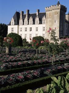 Gardens, Chateau De Villandry, Indre-Et-Loire, Loire Valley, Centre, France by Guy Thouvenin