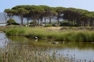 Lake with Water Plants and Bird by Guy Thouvenin