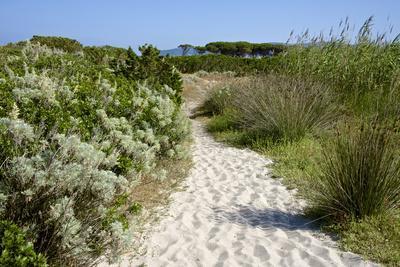 Sandy Path to the Beach, Scrub Plants and Pine Trees in the Background, Costa Degli Oleandri