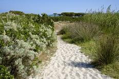 Sandy Path to the Beach, Scrub Plants and Pine Trees in the Background, Costa Degli Oleandri-Guy Thouvenin-Photographic Print