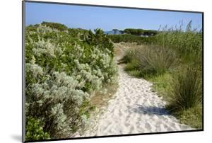 Sandy Path to the Beach, Scrub Plants and Pine Trees in the Background, Costa Degli Oleandri by Guy Thouvenin