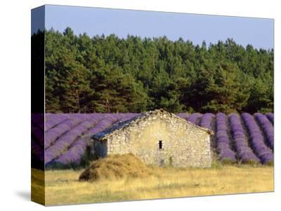 Stone Building in Lavender Field, Plateau De Sault, Haute Provence, Provence, France, Europe