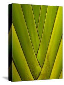Detail of Palm Leaf by Guylain Doyle