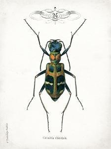 Beetle I by Gwendolyn Babbitt