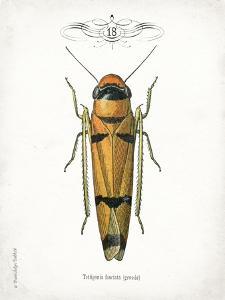Beetle II by Gwendolyn Babbitt