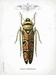 Beetle III by Gwendolyn Babbitt