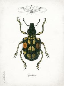 Beetle IV by Gwendolyn Babbitt