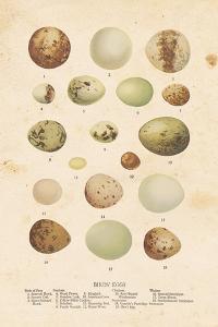 Birds Eggs II by Gwendolyn Babbitt