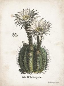 Cacti IV by Gwendolyn Babbitt