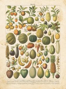 French Fruit Chart by Gwendolyn Babbitt