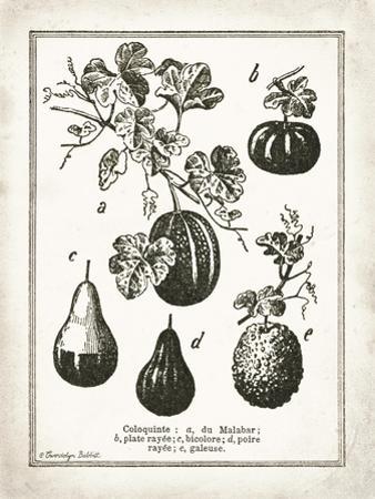 French Gourds by Gwendolyn Babbitt