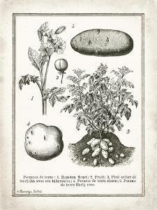 French Potatoes by Gwendolyn Babbitt