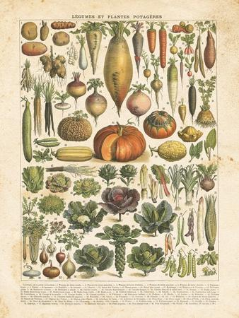 French Vegetable Chart