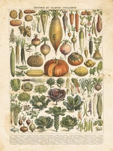 French Vegetable Chart by Gwendolyn Babbitt
