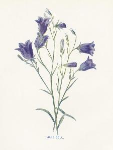 Hare-Bell by Gwendolyn Babbitt