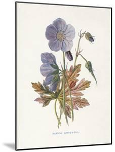 Meadow Cranes-Bill by Gwendolyn Babbitt