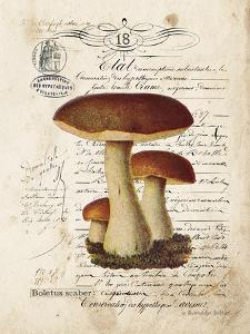 Mushroom II by Gwendolyn Babbitt