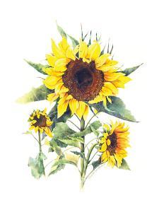 Sunflowers by Gwendolyn Babbitt