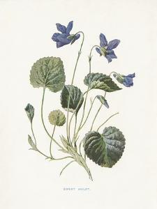 Sweet Violets by Gwendolyn Babbitt