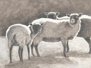 Three Heirloom Sheep by Gwendolyn Babbitt
