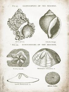 Vintage Shells I by Gwendolyn Babbitt