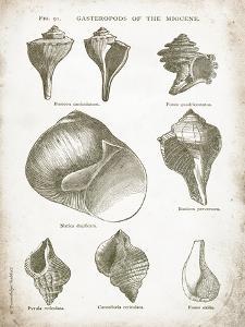 Vintage Shells II by Gwendolyn Babbitt