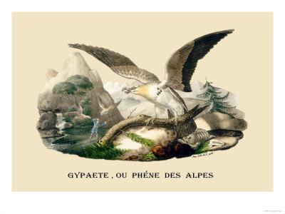 Gypaete, Ou Phene des Alpes-E^f^ Noel-Art Print
