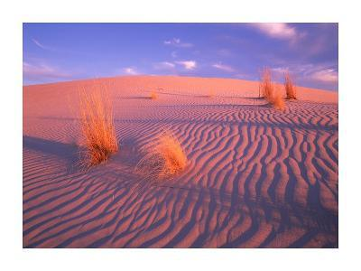 Gypsum dunes, Guadalupe Mountains National Park, Texas-Tim Fitzharris-Art Print