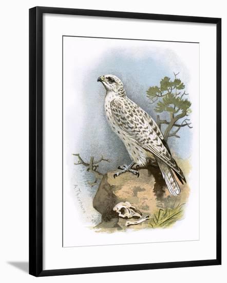 Gyr-Falcon-English-Framed Giclee Print