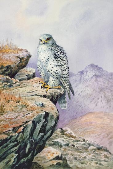 Gyrfalcon-Carl Donner-Giclee Print