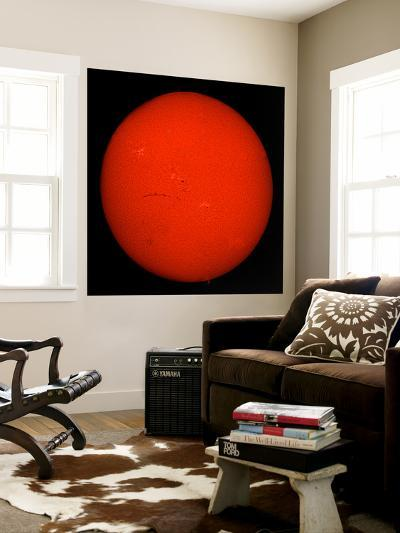 H-Alpha Full Sun in Red Color with Active Areas and Filaments-Stocktrek Images-Wall Mural
