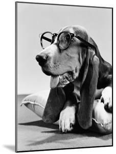 Basset Hound Wearing Spectacles by H. Armstrong Roberts