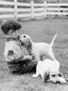 Little Boy Sitting in Grass With One Setter Puppy Licking Face and Another Lying in Grass by H. Armstrong Roberts