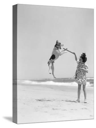 Wire Haired Terrier Dog Jumping in the Air Catch