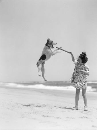 Wire Haired Terrier Dog Jumping in the Air To Catch a Stick Held By Little Girl