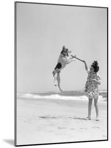 Wire Haired Terrier Dog Jumping in the Air To Catch a Stick Held By Little Girl by H. Armstrong Roberts