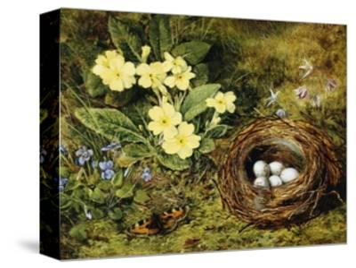 Primroses with a Bird's Nest