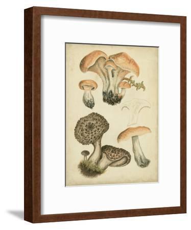 Antique Mushrooms I