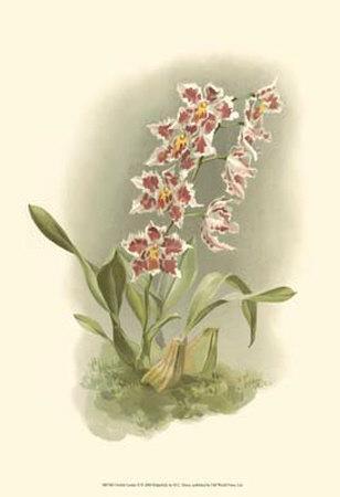 Orchid Garden II