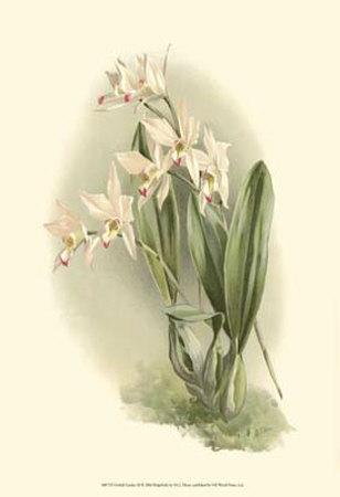 Orchid Garden III
