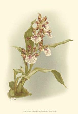 Orchid Garden IV