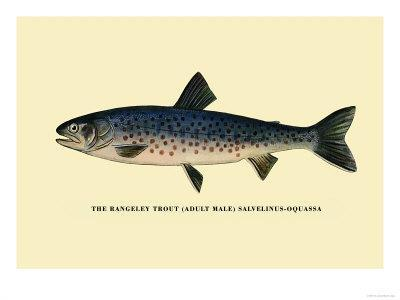 The Rangeley Trout