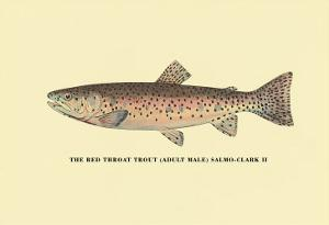The Red Throat Trout by H^h^ Leonard