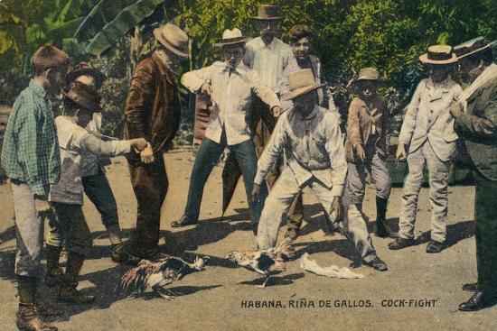 Habana. Rina de Gallos. Cock-fight, c.1900s-Unknown-Giclee Print