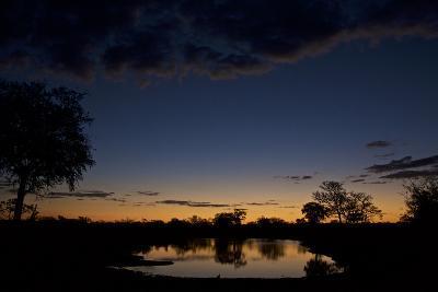 Habitat in South Africa's Timbavati Game Reserve-Steve Winter-Photographic Print