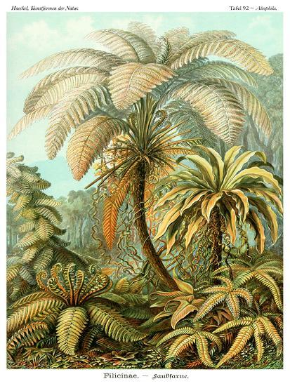 Haeckel Plate 92-Coastal Print & Design-Art Print