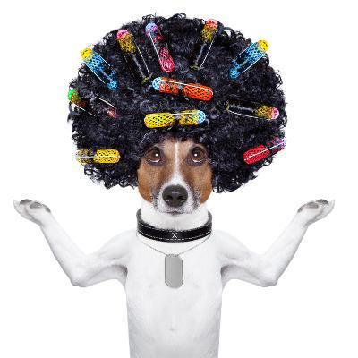 Hairdresser Dog With Curlers-Javier Brosch-Photographic Print