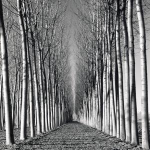 Vanishing Point by Hakan Strand