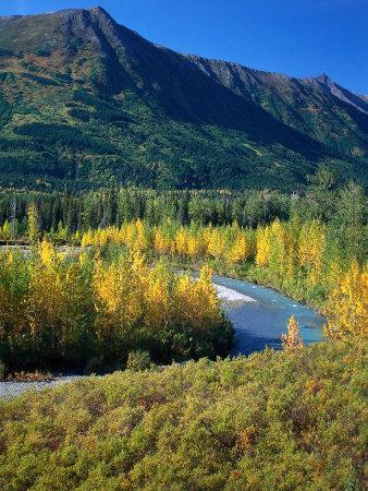 Mts and Trees in Autumn, Denali National Park, AK